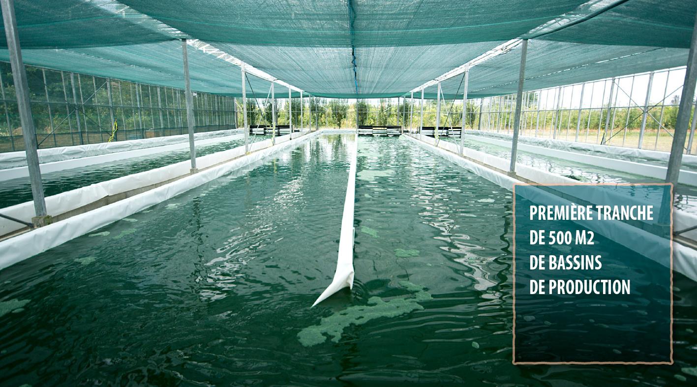 Première tranche de 500 m2 de bassins de production.