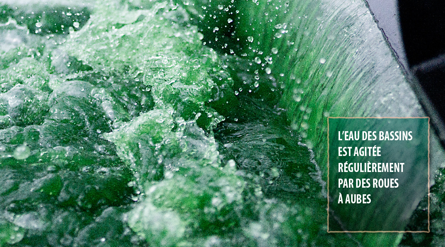 L'eau des bassins est agitée régulièrement par des roues à aubes.
